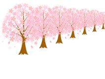 Row of cherry blossom trees background Royalty Free Stock Photos