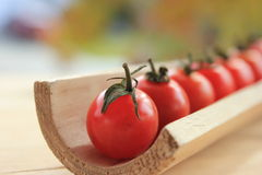 Row of Cherry Tomatoes. Row of red cherry tomatoes in a wooden trough Royalty Free Stock Image