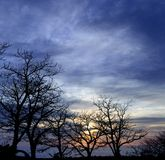 Row of chestnut trees on vibrant sky at dawn Stock Photo