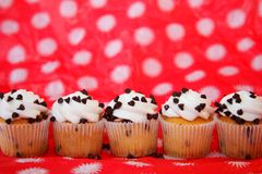 Row of chocolate chip cupcakes Stock Images