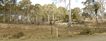 Row of chopped down, cleared and bulldozed tree's. On a rural property, New South Wales, Australia stock photos