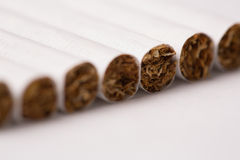 Row of cigarettes with tobacco texture Stock Photo