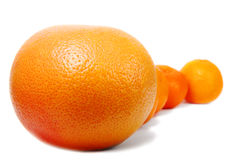Row of citrus fruits Stock Images