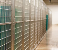 A row of clean kennels for Fido. Row of clean, bright metal kennels to board a pet dog while the owner is traveling or at work Royalty Free Stock Photography