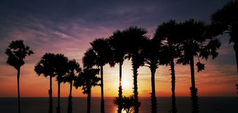 Row of coconut palm trees with beautiful dramatic sky sunset or Stock Photo
