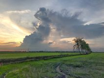 Row of coconut trees On the walk in the rice field at Thai countryside, Beautiful clouds and sunshine With the concept of rural li Royalty Free Stock Photos