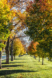 Row of Colored Fall Trees in Autumn Royalty Free Stock Image