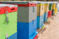 Row of Colorful Bee Hives With Trees in the Background. Bee Hives Next to a Pine Forest in Summer. Honey Beehives in the Me. Row of Colorful Bee Hives With Trees Stock Photos