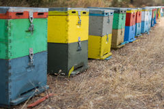 Row of Colorful Bee Hives With Trees in the Background. Bee Hives Next to a Pine Forest in Summer. Honey Beehives in the Meadow. Row of Colorful Bee Hives With Royalty Free Stock Photography