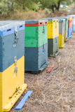 Row of Colorful Bee Hives With Trees in the Background. Bee Hives Next to a Pine Forest in Summer. Honey Beehives in the Medow. Row of Colorful Bee Hives With Royalty Free Stock Image
