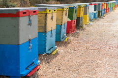 Row of Colorful Bee Hives With Trees in the Background. Bee Hives Next to a Pine Forest in Summer. Honey Beehives in the Medow. Row of Colorful Bee Hives With Stock Photos