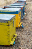 Row of Colorful Bee Hives with Trees in the Background. Bee Hives Next to a Pine Forest in Summer. Wooden Honey Beehives in the Me. Adow Stock Photos