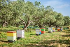 Row of colorful beehives in a field with olives trees. In Greece Stock Photos