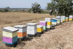 Row of colorful beehives Stock Photos