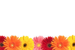 Colorful Daisy Border royalty free stock image