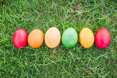 Row of Colorful Easter Eggs with Daisy Royalty Free Stock Photography