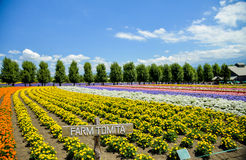 Row of colorful flower in Tomita farm Royalty Free Stock Images