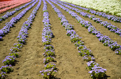 Row of colorful flowers with sunshine. 11 Stock Photography