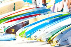 Row of surfboards lined up on sandy beach in Hawaii Royalty Free Stock Images