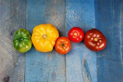 Row of colorful tomatoes royalty free stock images
