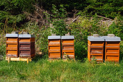 Row of colorful wooden beehives with trees in the background Royalty Free Stock Image