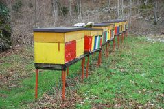 Row of Colourful Beehives Stock Images