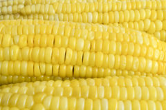 Row of corn Stock Photos