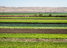 Row Crops Royalty Free Stock Photography