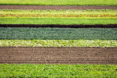 Row Crops. Of various types and colors Royalty Free Stock Photos
