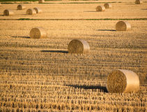 Row crops. Rural view in late autumn of row crops, soil preparing before winter Stock Image