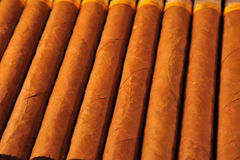 Row of Cuban cigars Royalty Free Stock Images