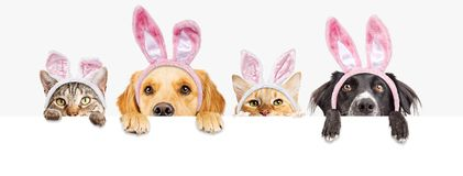 Easter Dogs and Cats Over Web Banner. Row of cute dogs and cats looking over a blank white, web banner wearing Easter Bunny ears royalty free stock photo