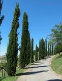 A row of Cypress trees Stock Photos