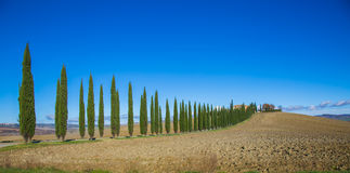 Row of cypresses. Lined with cypresses among the plowed fields in the hills of Tuscany, Italy Stock Photos