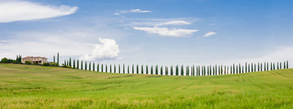 Row of cypresses in the Tuscan hills Stock Photo