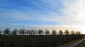 Row of deciduous trees. Leading to rural farmhouse in Southern Denmark Royalty Free Stock Photography