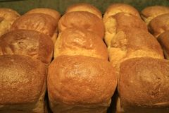 Row of delectable fresh baked bread loaves for background. Food texture stock photo