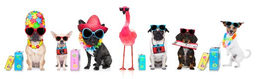 Row of dogs on summer vacation royalty free stock photo