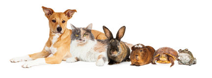 Row of Domestic Pets Stock Photo