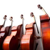 Row of double basses against a wall on square picture. Row of double basses leaning against a wall on square picturen royalty free stock photo