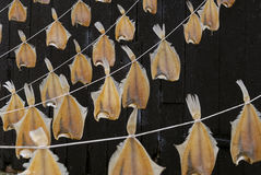 Row of dried fish hanging outside stock images