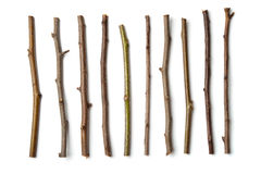 Row of dry wooden twigs Stock Photography