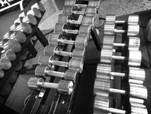A row of dumb-bells in gym. Dumb-bells in gym Royalty Free Stock Photo