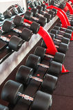 Row of dumbbells. In the gym Stock Photos