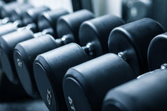 Row of dumbbells at gym Royalty Free Stock Photo