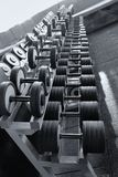 Row of dumbbells in modern sports fitness club Royalty Free Stock Photo