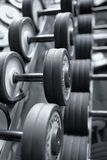 Row of dumbbells in modern sports fitness club Royalty Free Stock Image