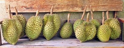 Row of Durian. Fresh durians in row on the wooden bench Royalty Free Stock Photos