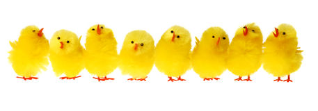 Row Of Easter Chicken Royalty Free Stock Images