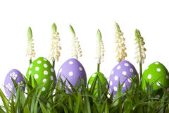 Row of Easter eggs in Fresh Green Grass Stock Image